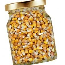 Maïs à éclater bio